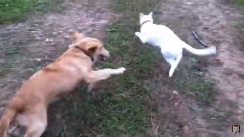 追いかけっこする犬と猫