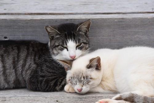 猫の集会で寝ている猫