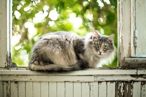 窓辺に座っている猫