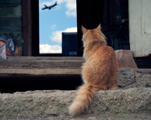猫と飛行機