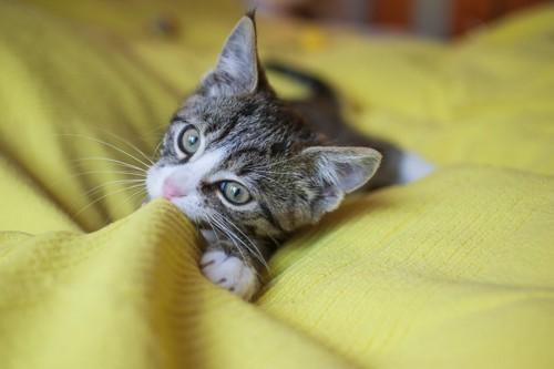 布を口に充てる猫