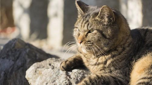 横をむく猫
