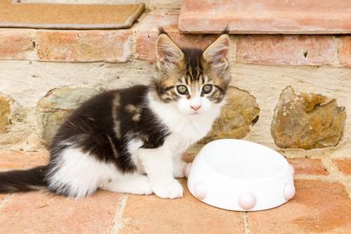 食器の前にいる子猫