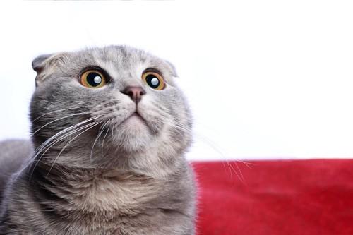 驚いた表情で何かを見つめる猫