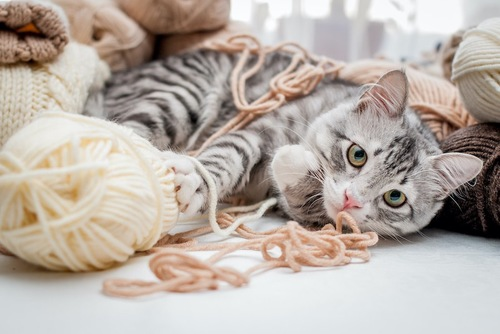 毛糸玉と横になる猫