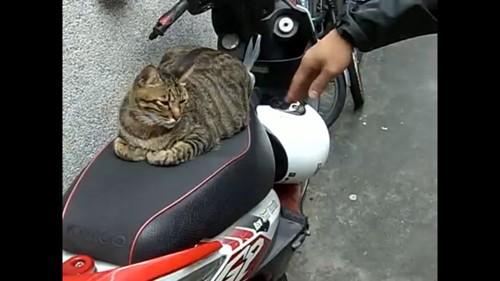 バイクのシートに猫