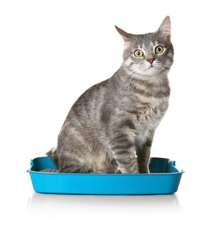 猫用のトイレに座る猫