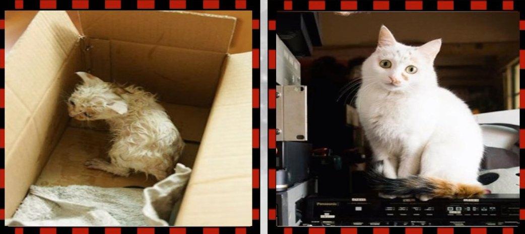 子猫から成猫へのビフォーアフター