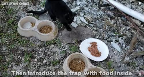 餌に近寄る黒猫