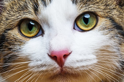 真剣な猫の顔アップ