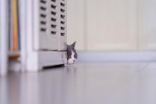 物陰に隠れて顔だけ出す猫