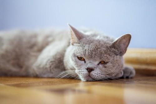 床の上に寝そべって眠そうな猫
