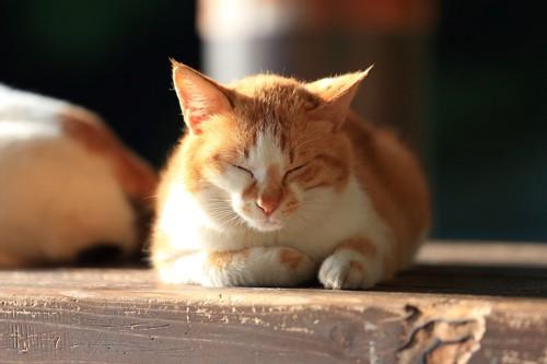 日向でくつろぐ猫