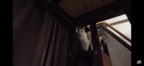 隙間から見つめる猫