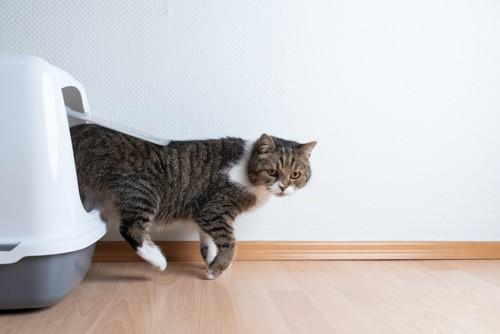 猫用のトイレから出てくる猫