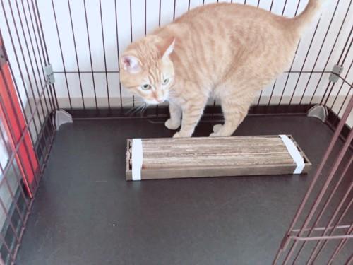 完成した爪とぎと愛猫チャロ