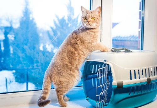 窓際に置いてあるキャリーに登る猫