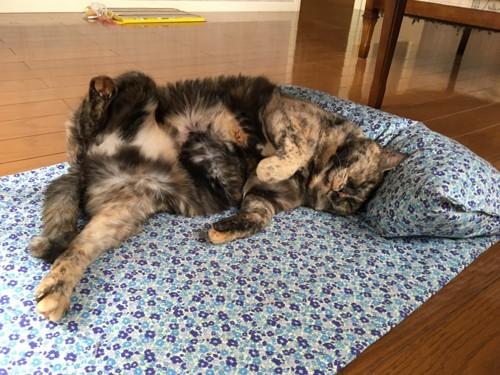 ベッドでくつろぐサビ猫