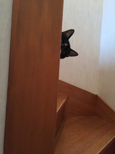 #愛猫はどう思っているのか