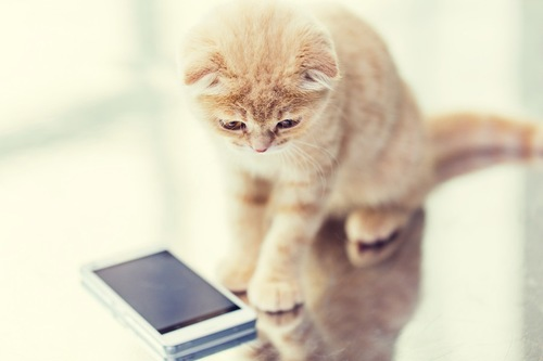 スマートフォンで遊ぶ子猫