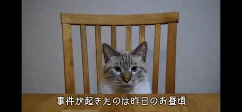 椅子に座る猫