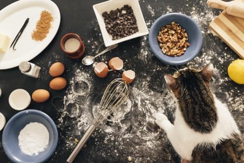 小麦粉が散らばった台の上を歩く猫