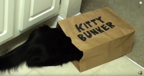 紙袋に入る黒猫