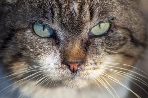 鼻水を出す猫