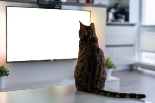 テーブルに座ってテレビを見る猫