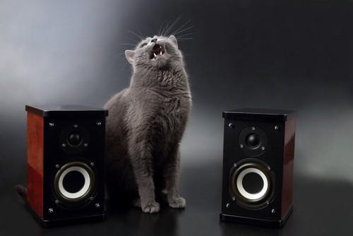 音楽機器にいる猫
