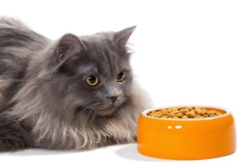 ご飯を前にしても食べない猫