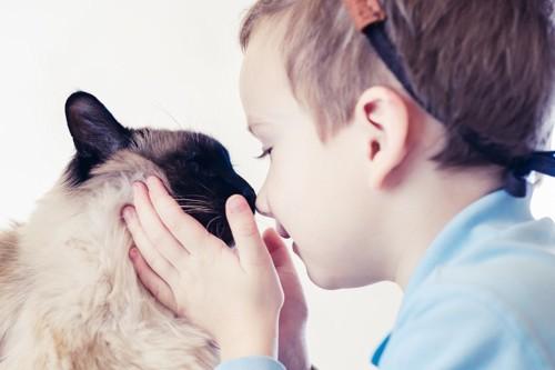 猫と鼻を付ける少年