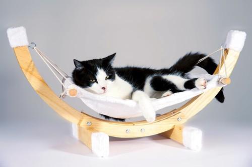 ハンモックで休む猫