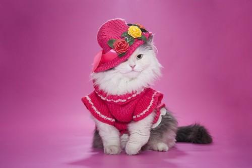 おしゃれな服を着た猫
