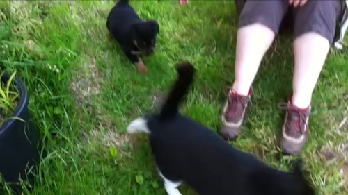猫を追いかける犬