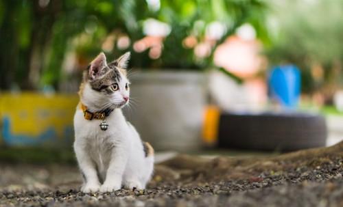鈴の首輪をした子猫