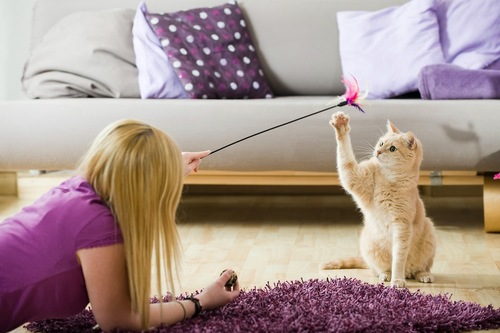 猫じゃらしで遊んでいる女性と猫
