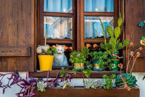 窓の外を見る猫とベランダに置かれた植木鉢