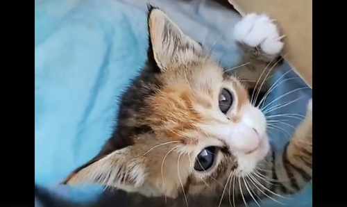 段ボールの中の子猫