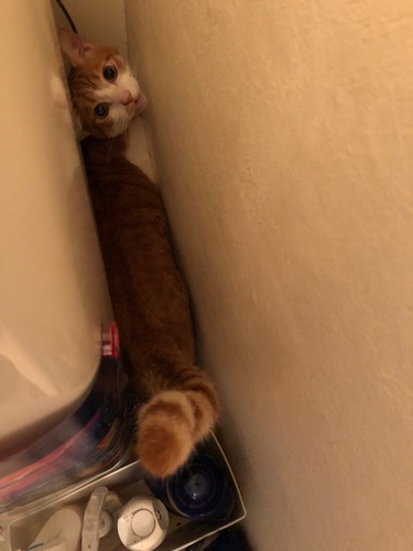 家具の隙間に入る猫