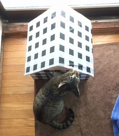 猫がハウスの屋根を噛んでいる
