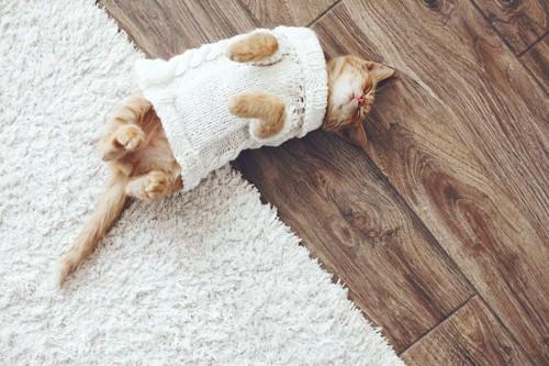 服を着て寝転ぶ猫