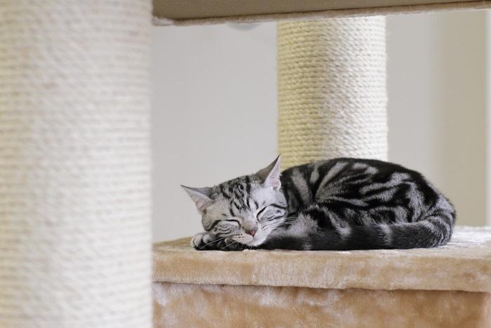 キャットタワーで眠る子猫の写真