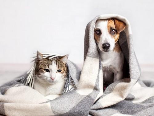 くるまっている猫と犬