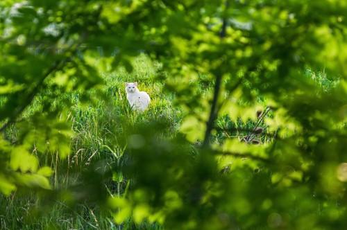 遠くの草むらから見つめる猫