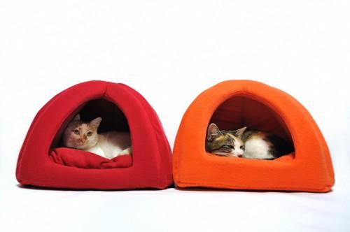 お揃いの夏用ベッドでくつろぐ二匹の猫