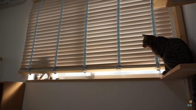 その様子をみていた猫