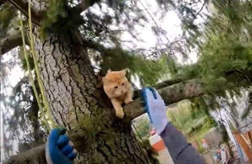 立ち往生する猫
