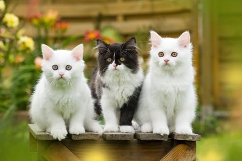 木箱の上に座る3匹の子猫