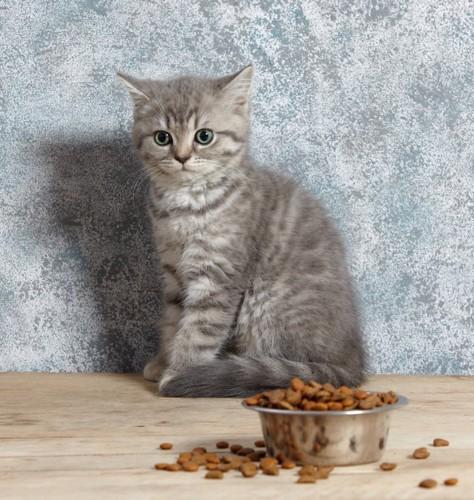 餌を前にした仔猫